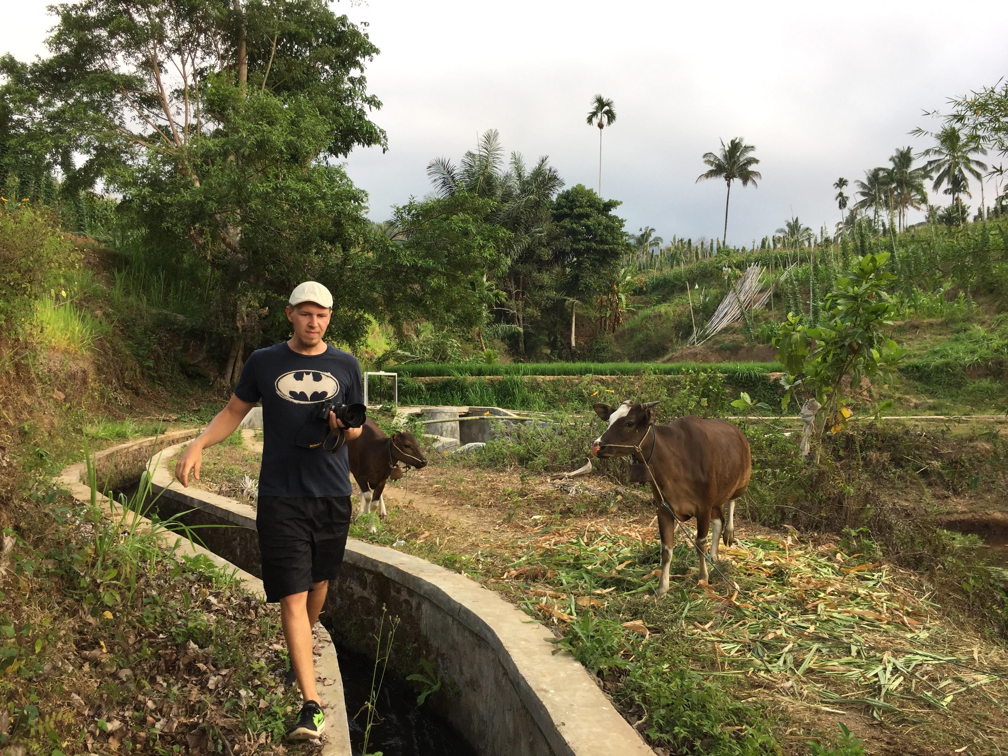 Ich wehrte mich geschickt gegen ein paar Kühe.