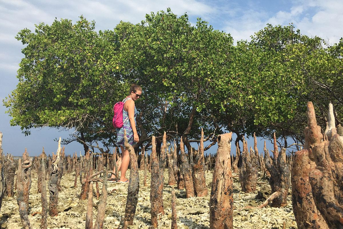 Zeit um versteckte Mangrovenwälder zu entdecken.