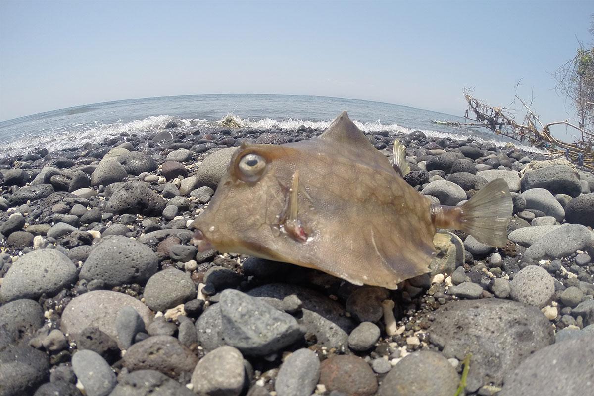 Alienfische am Strand bestaunen.