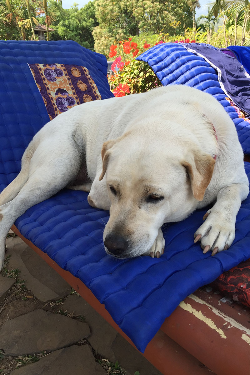 Mit Rocko ein Mittagsschläfchen auf der Sonnenliege machen.