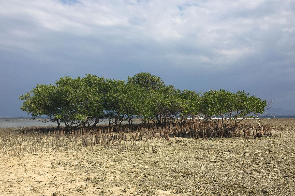 Durch Mangrovenwälder schleichen.