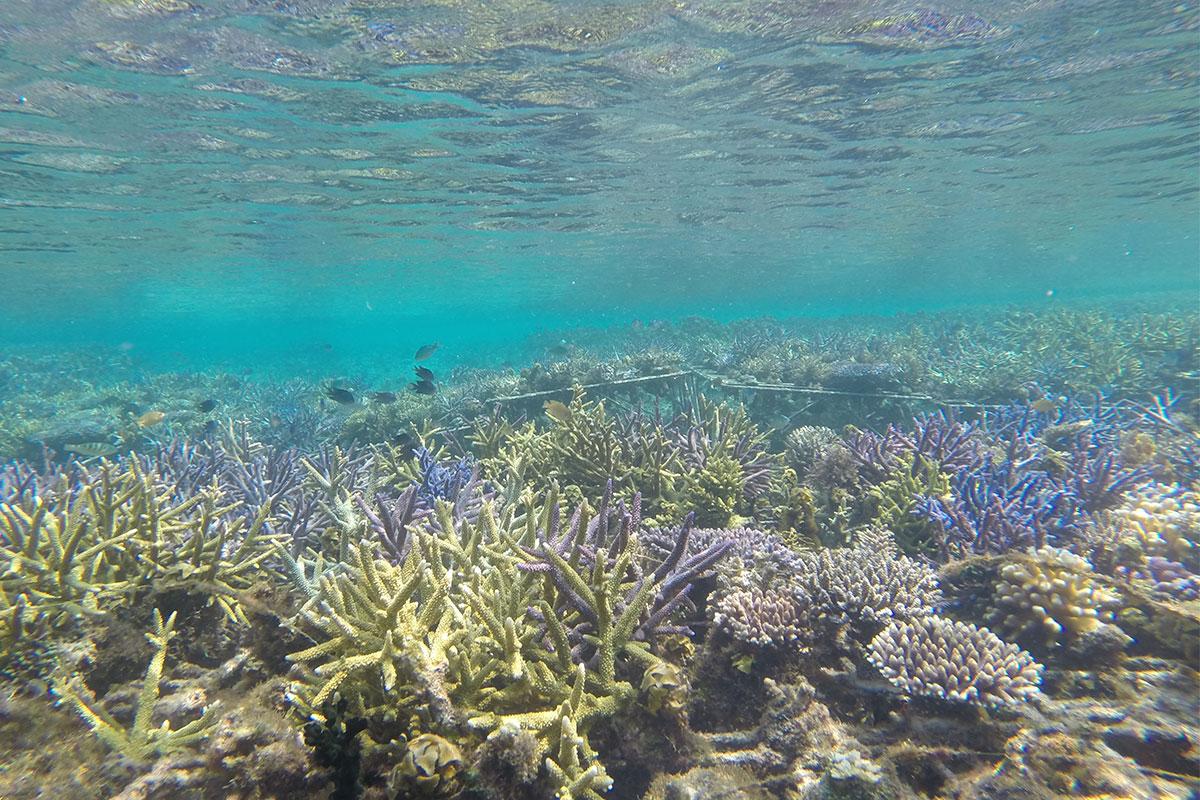 Nemo im Korallenriff finden.
