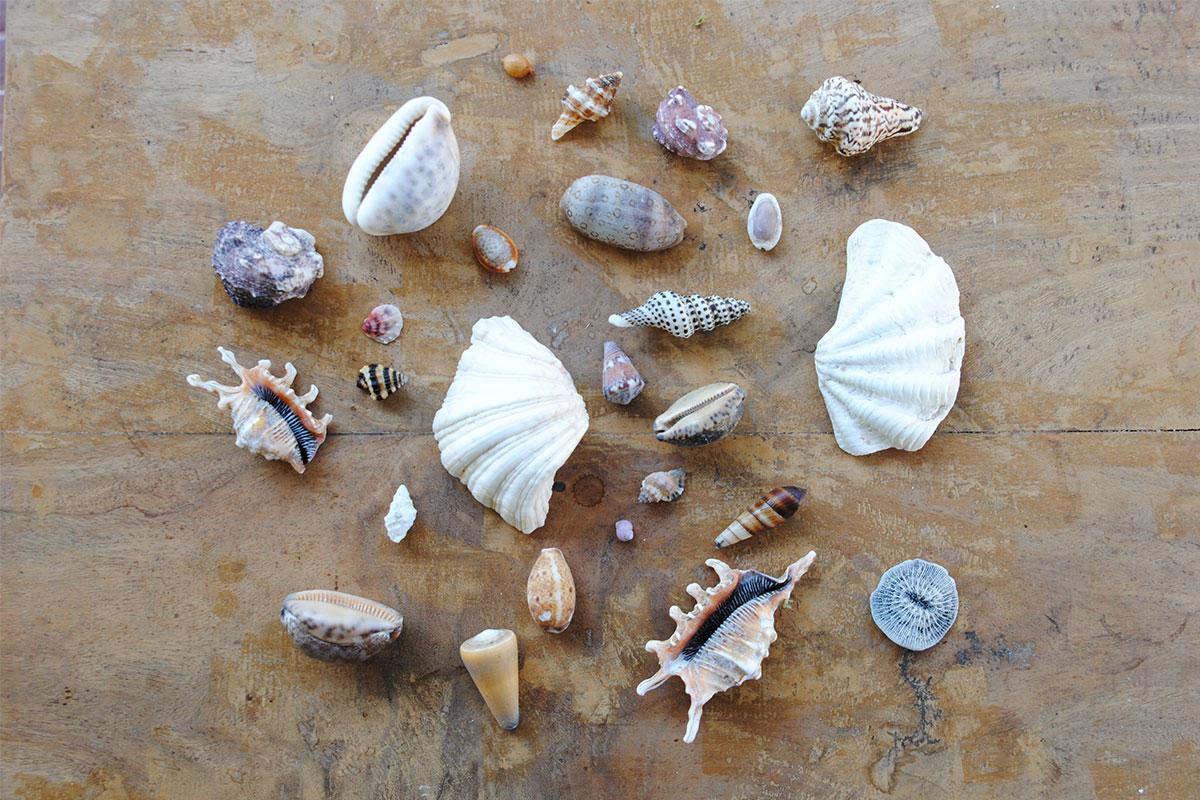 So viele Muscheln sammeln, wie man tragen kann.
