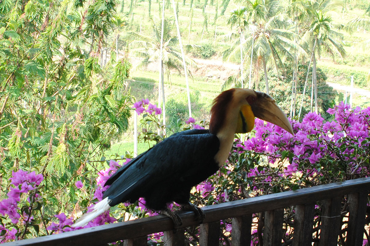 Den Nashornvogel Frida kennen lernen.