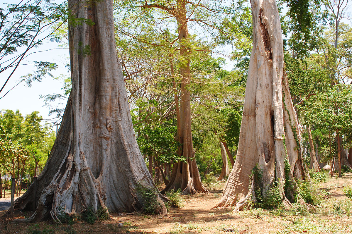 Neben ganz großen Bäumen einmal ganz klein fühlen.