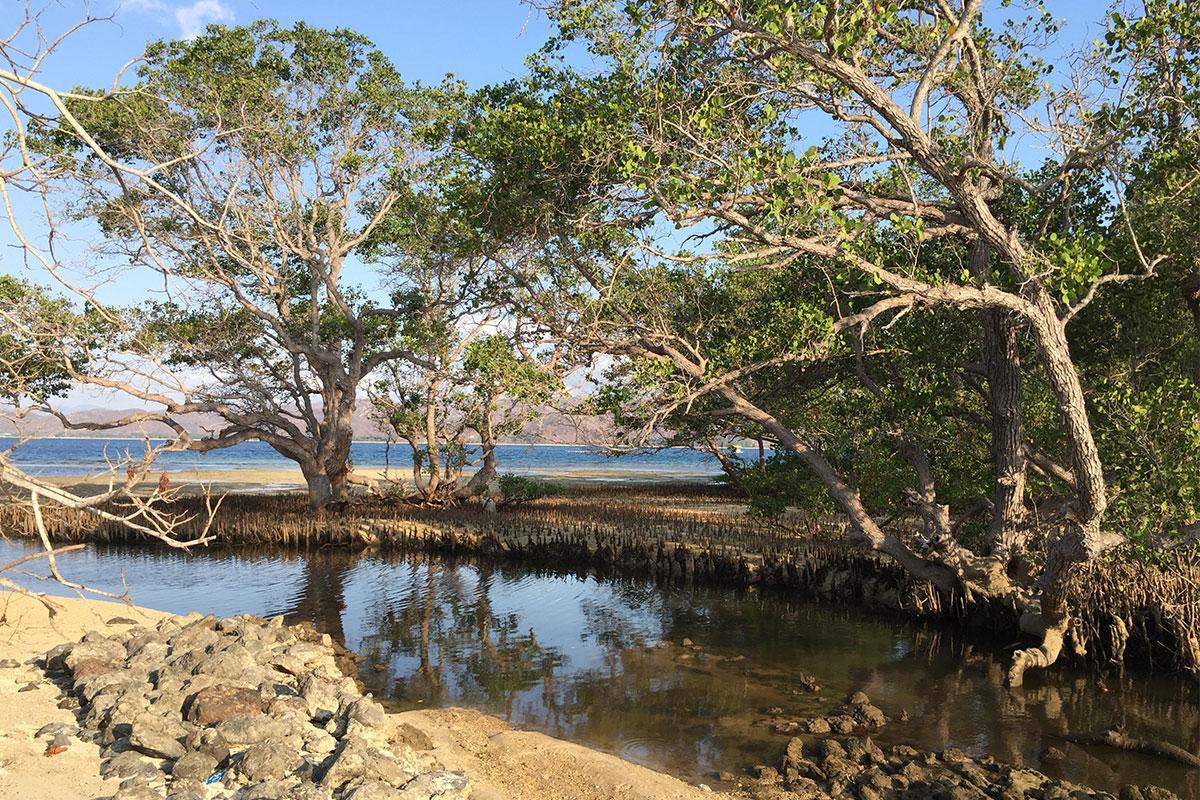 baum-am-strand-und-fluss-gili-gede-lombok