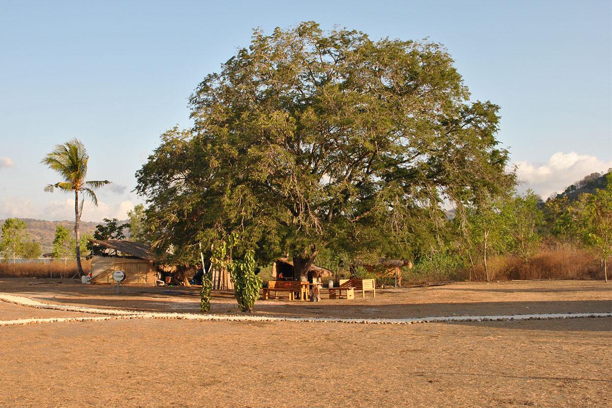 Erbaut aus dem gleichnamigen Tamarindbaum.