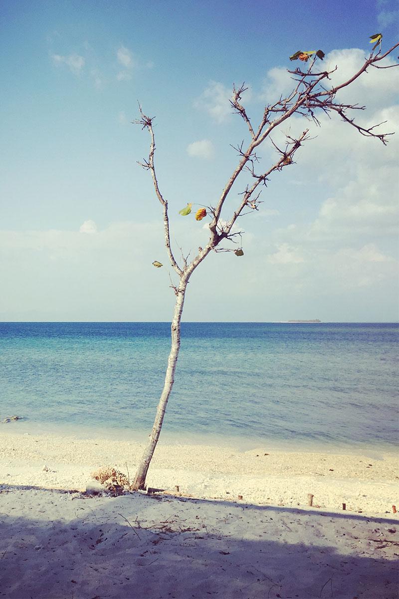 baum-tamarind-gili-gede-lombok