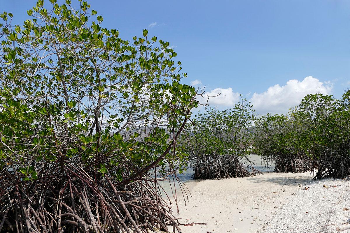 Mangrovenwäldchen.