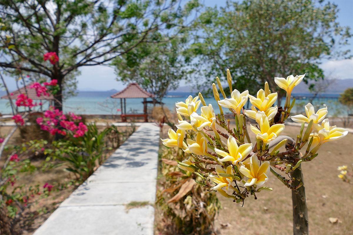 flower-paradies-gili-gede-lombok