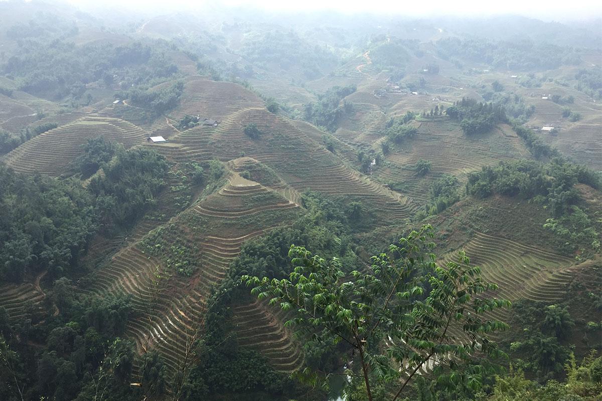 reisterrassen-im-nebel-sapa-vietnam