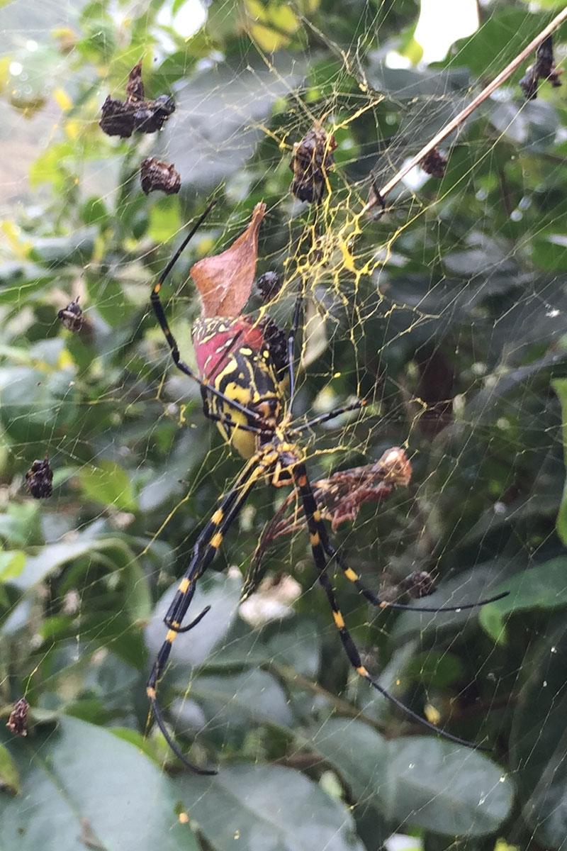 Bei all den rutschigen Strassen, muss man höllisch aufpassen nicht in die Fänge der Riesenspinnen zu gelangen.