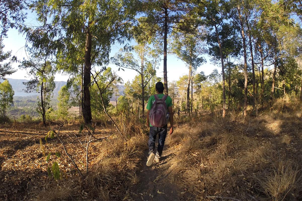 Durch den Wald zurück ins Tal.