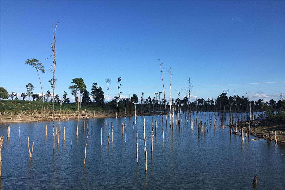 Im Wasser muss etwas sein, dass die Bäume hat absterben lassen.