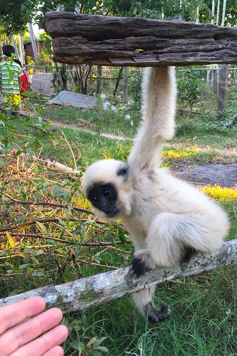 Jans Primatenerlebnis Nr.1