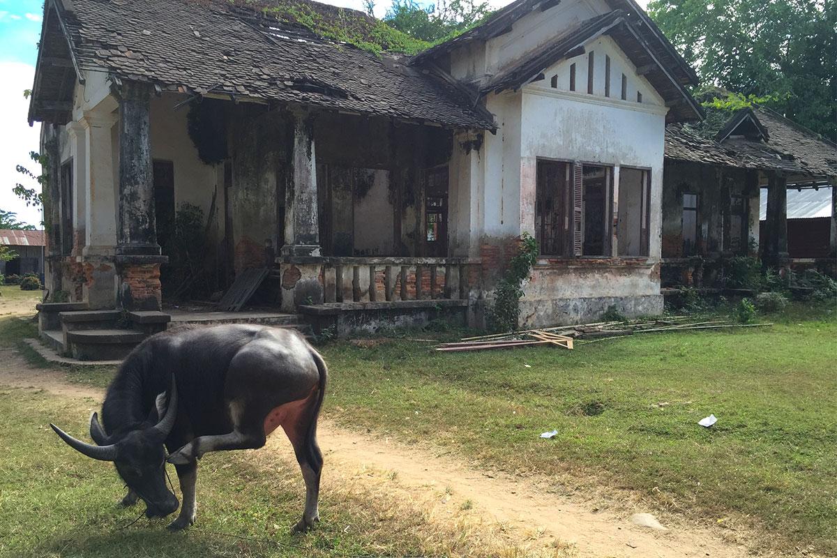 Stier-vor-Haus-Laos-Viertausend-Inseln