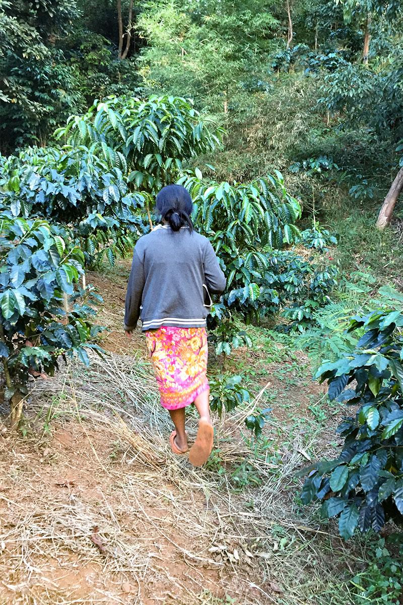 Ani  flitzt über ihre Kaffeeplantage.,,