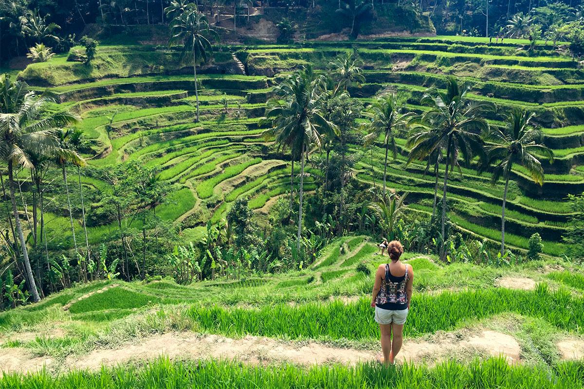 reisterrassen-tegalalang-Tempeltour-in-Bali