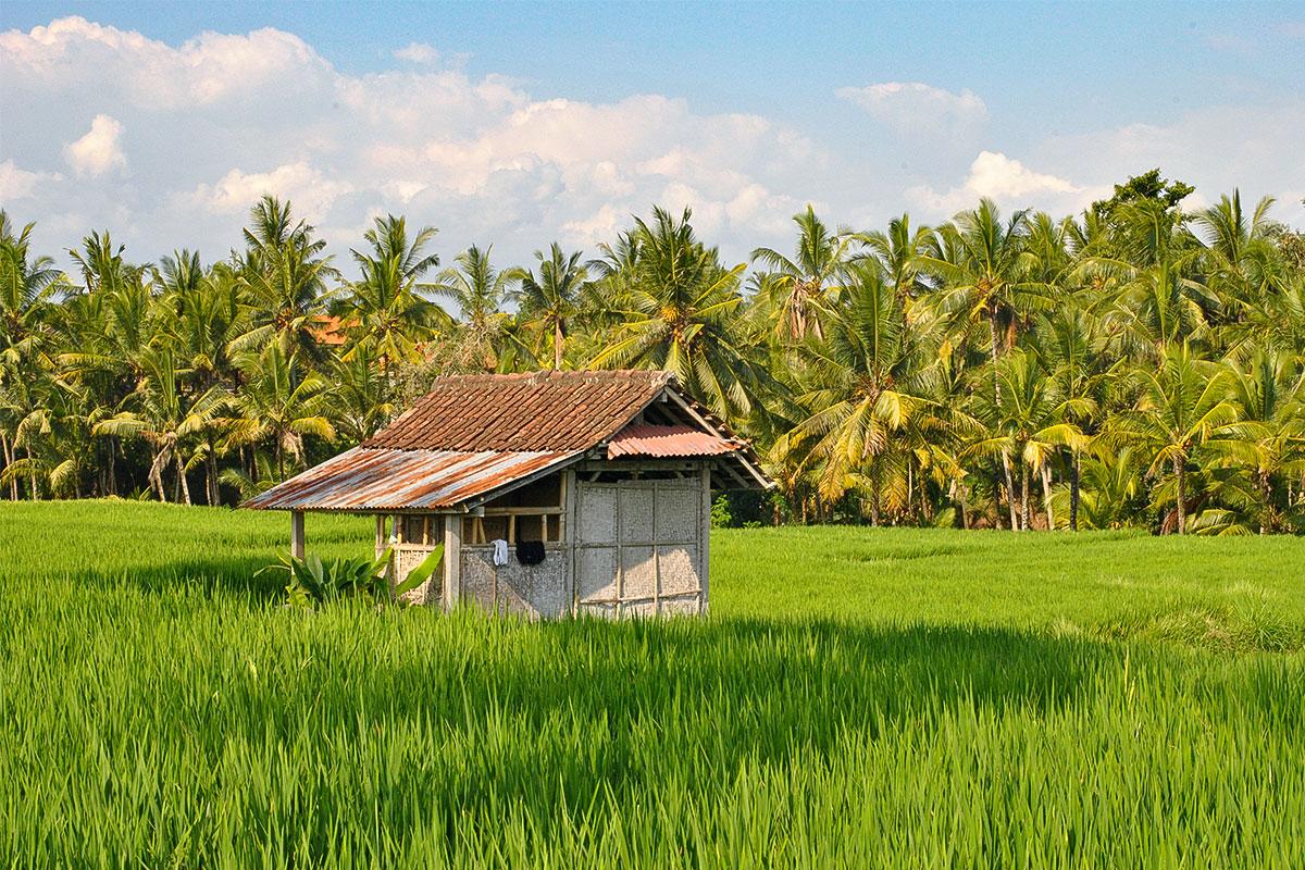 Haus-im-Reisfeld-Ubud-Bali-Indonesien