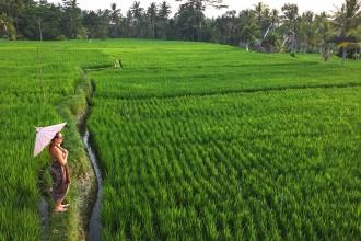 Ich-mit-Schirm-im-Reisfeld-Manyi-Village-Ubud-Bali-Indonesien