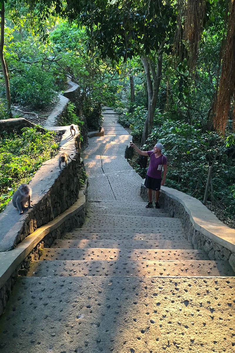 Schon ungewohnt überall zwischen freilaufenden Affen zu spazieren.