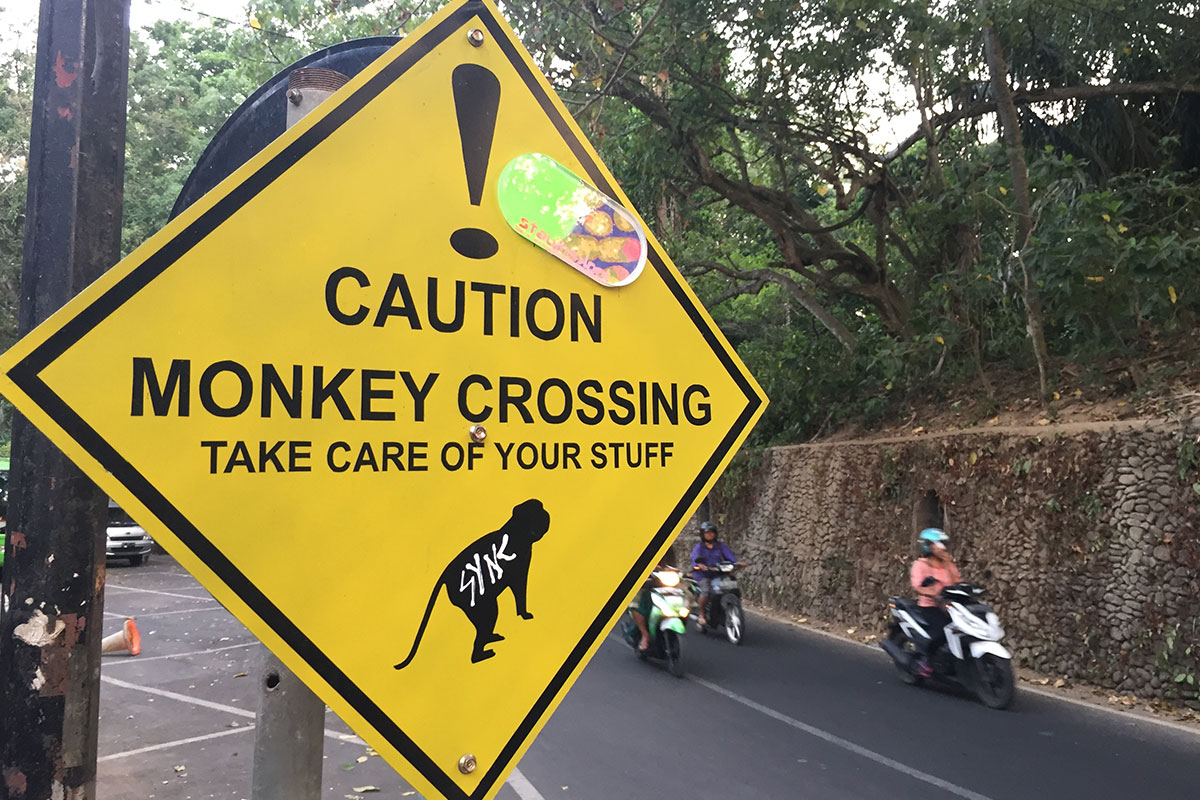 Denn Bali ist bekannt für seinen Affenwald.