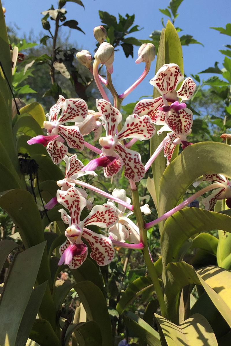 Orchidee-Waldlauf-Munduk-Bali