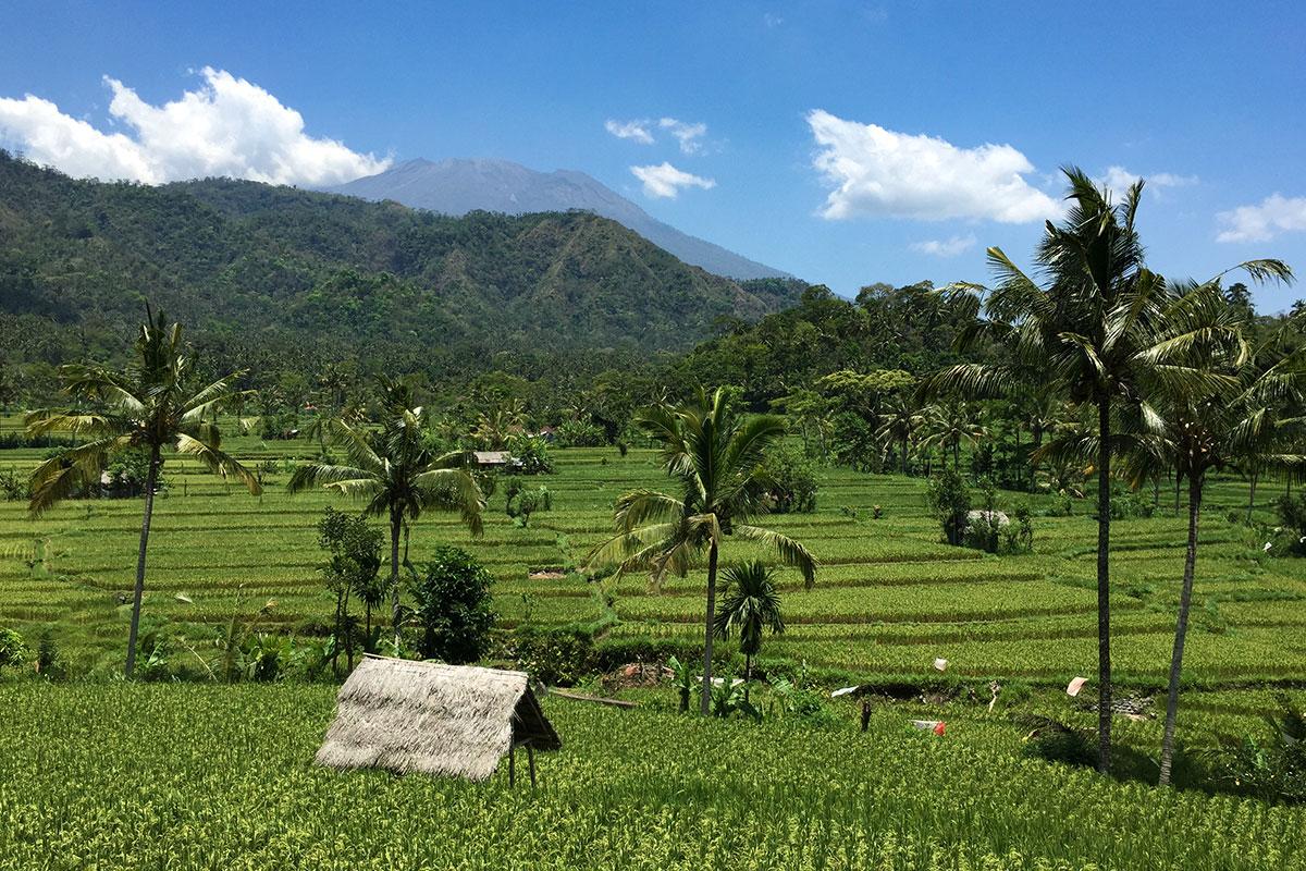 Eine der schönsten Reisfelder auf Bali.