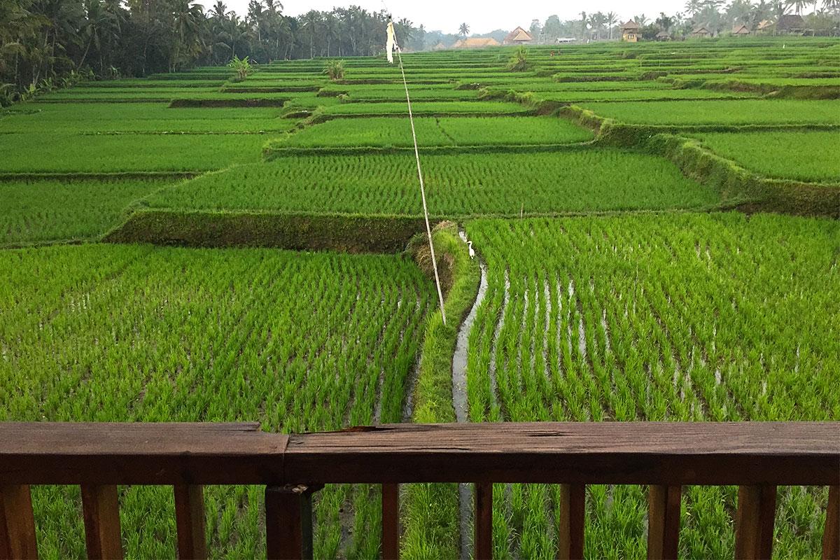 Im Manyi Village wohnt man inmitten von Reisfeldern.