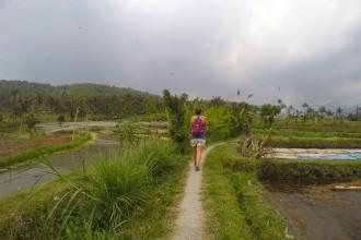 Reisfeldpanorama-Munduk-Bali