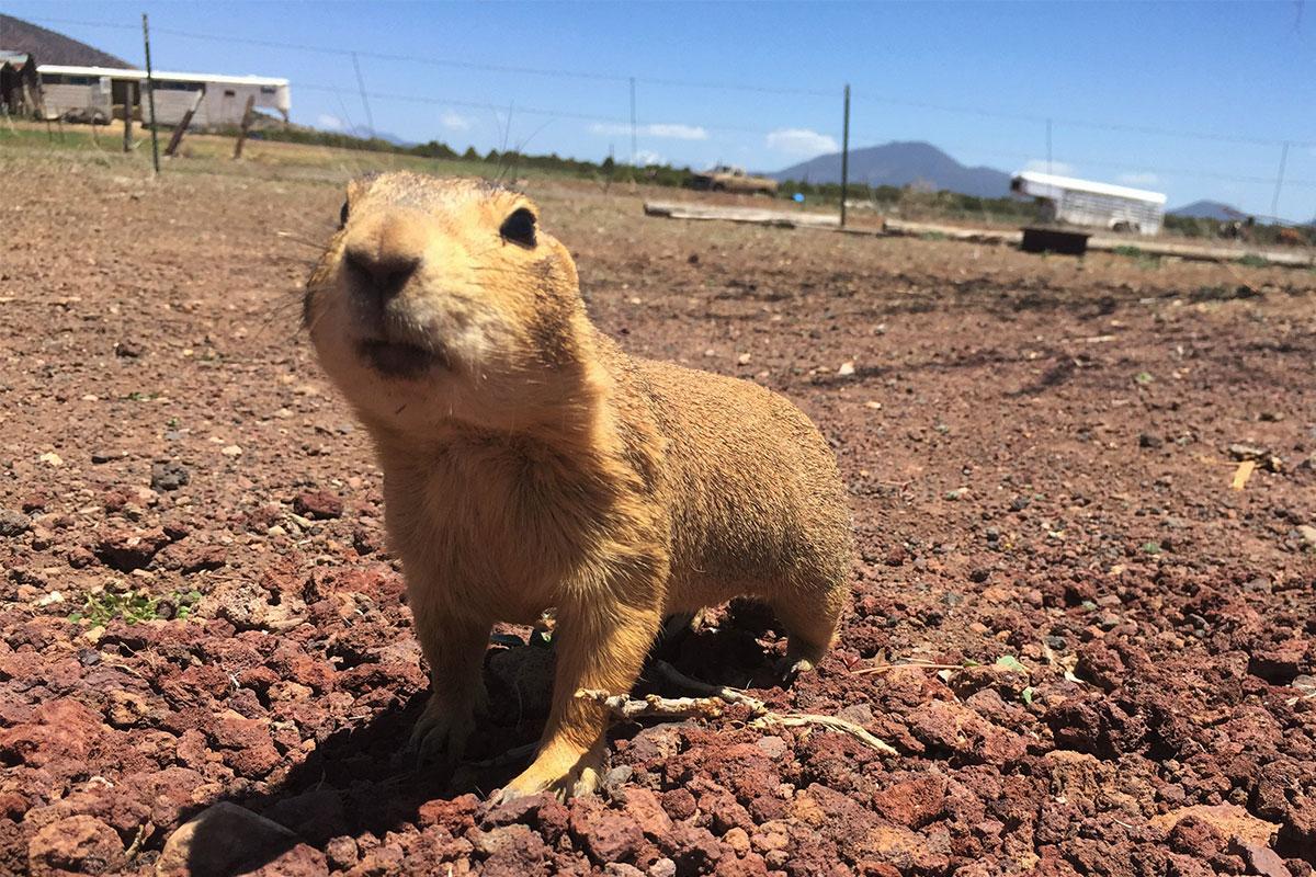 Das ist Alvin von den Chipmunks.