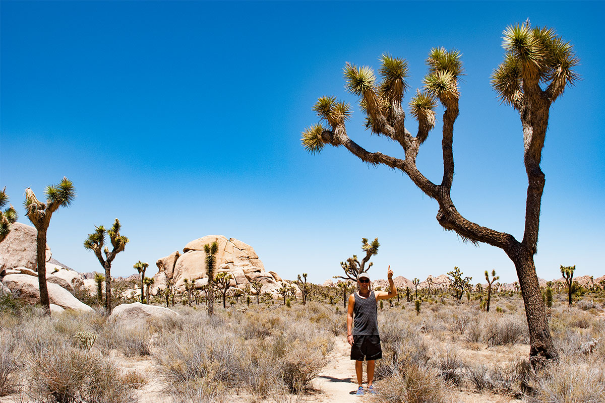 mann-in-wueste-joshua-tree-nationalpark-kalifornien-usa