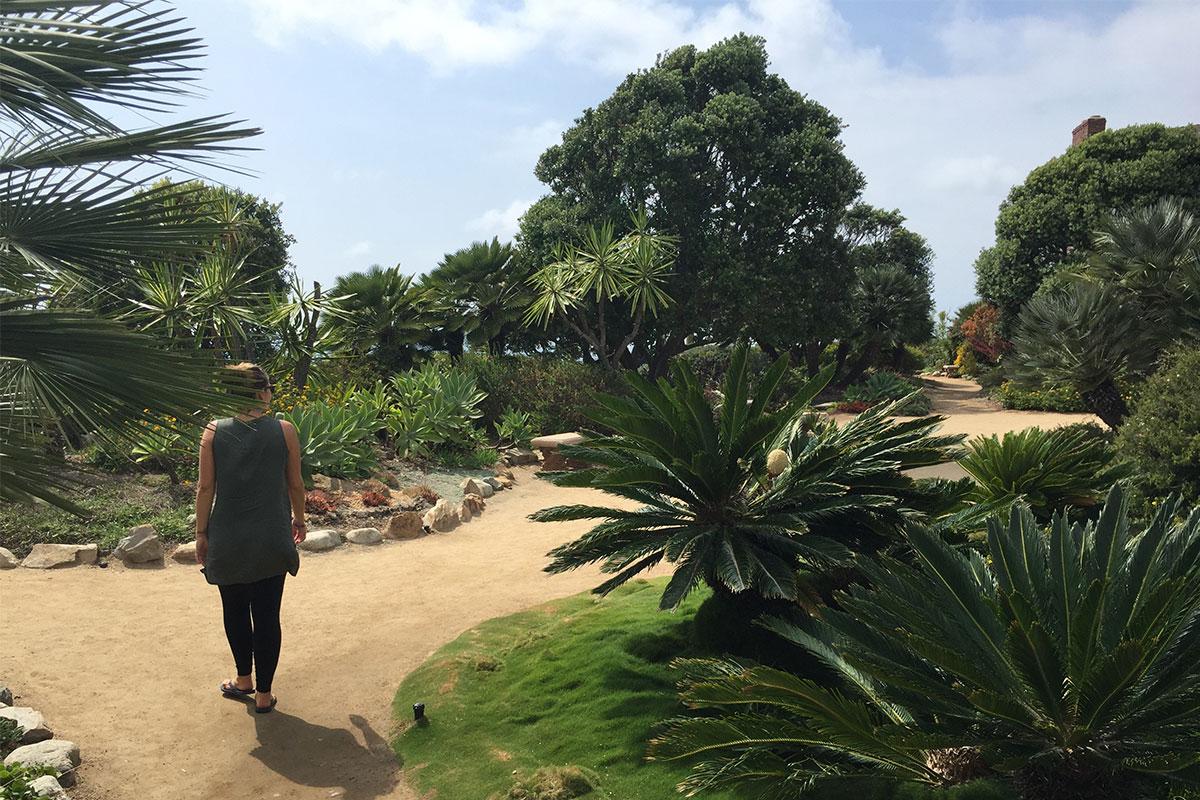 EIn himmlischer kleiner Garten in der Nähe von La Jolla.