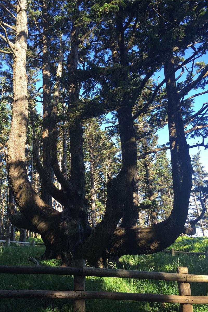 Der Octupus Tree - geht so.